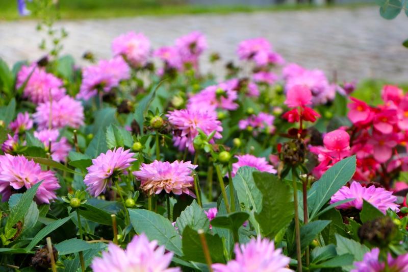 flowers_neomania